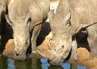 Special 15-Day Adventure Kruger Safari