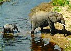 Kruger 10-Day Northern Kruger Adventure