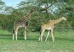 Family Wildlife Safari in Kenya