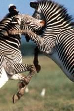 Family Wildlife Safari in Kenya