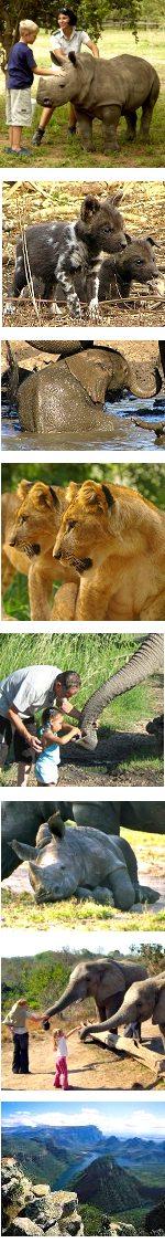 South Africa Kruger Park Family Safari 3 days