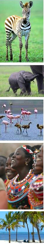 Flamingo, Wildlife and Beach Safari