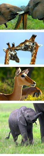3 Days: Amboseli National Park Safari, Kenya