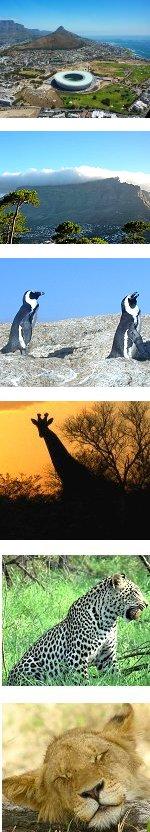 10-Day Cape Town + Kruger Safari