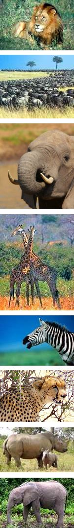 Northern Circuit Safari in Tanzania