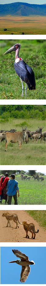 Wildebeest migration – Masai Mara River Crossing Safari