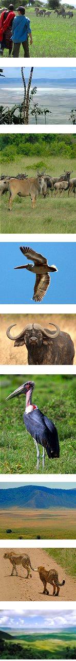 7 Days: Ngorongoro Highland and Lake Natron Trek