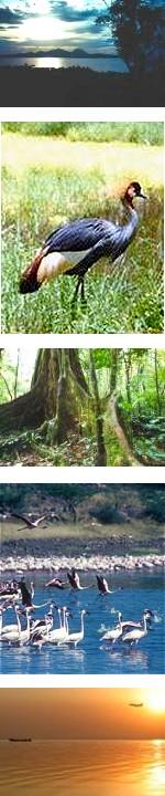 Kenya Unspoilt : Lakes, Mt. Elgon, Tea Plantations