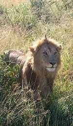 Kenya Rift Valley Lakes & Masai Mara Safari