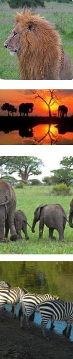 Amboseli, Lake Nakuru & Masai Mara Safari