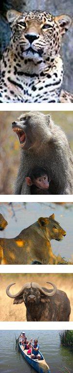 Selous Reserve Wildlife Walk : 4 days 3 nights