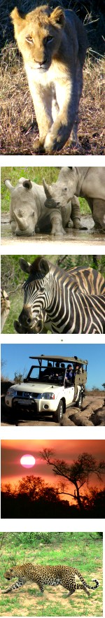 Kruger National Park, 8 Day Small Group Safari