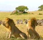 Seventh Natural Wonder of the World, Masai Mara Safari