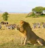 Kenya Camping to Samburu, Lake Nakuru & Masai Mara