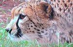 Luxury Safari Ngorongoro Crater and Tarangire NP