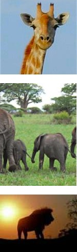 Lake Manyara, Ngorongoro Crater, Serengeti Safari