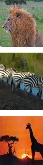 Lake Manyara Serengeti Ngorongoro Tarangire luxury Safari