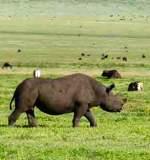 Lake Manyara, Serengeti, Ngorongoro, Tarangire Safari