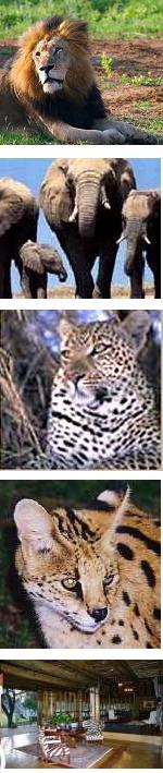 Kruger Park - Fly in Big 5 Safari