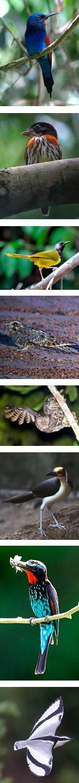 Ghana Birdwatching Tour