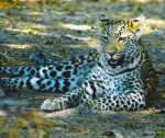Best of Botswana, Fully Guided Mobile Safaris