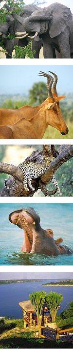 Queen Elizabeth National Park Wildlife Safari  Uganda