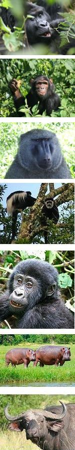 Primate Safari Uganda