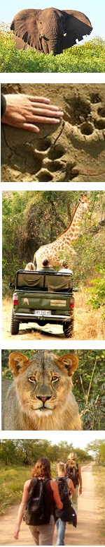Wildlife conservation expedition in South Africa