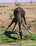 Tanzania Exclusive Lodge Private Safari