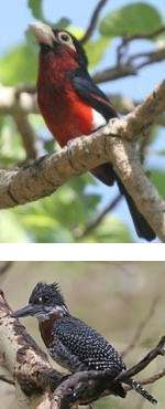Ethiopia Bird Watching Safari