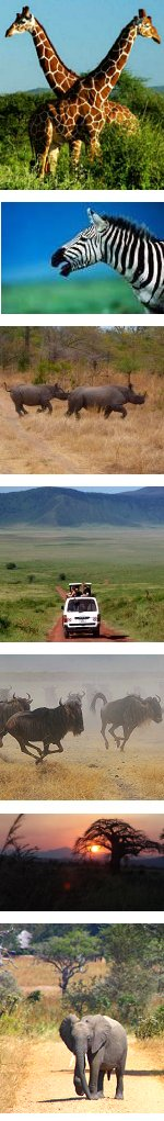 Kenya and Tanzania Luxury Safari