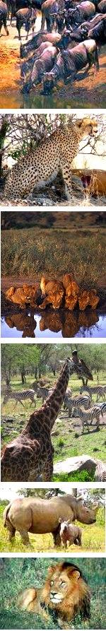 Great Wildebeest Migration Lodge Safari, Tanzania