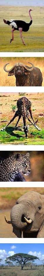 5 Days Fun Safari in Serengeti National Park
