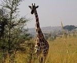 Murchison Falls National Park Wildlife Safari