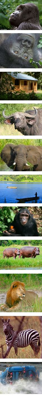 Discover Uganda Safari