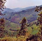Rwanda Gorilla Luxury Safari