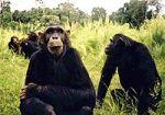 Rwanda Discovery Safari