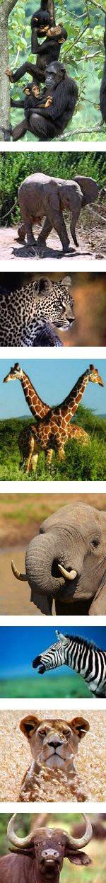 Two in One: Family Safari, Kenya and Tanzania