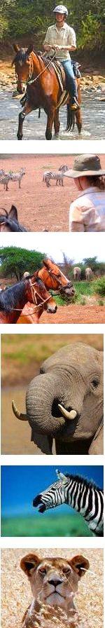 Horseback Riding and Wildlife Safari in Tanzania