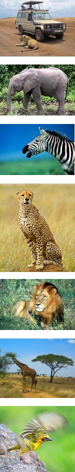 Jambo BIG Five Tanzania Safari - 5 days