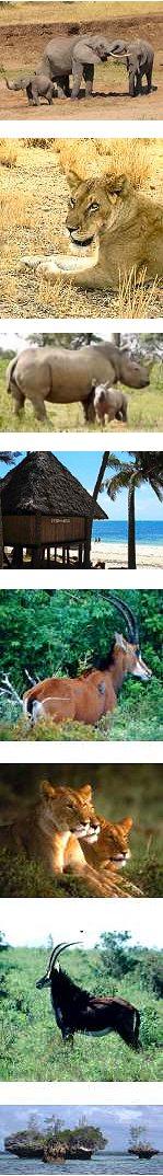 19 Days East Africa Wildlife Safari and Beach Holiday