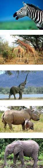East Africa Safari - Tanzania and Kenya