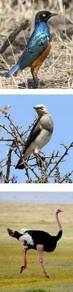 Bird Watching and Wildlife Safari in Tanzania