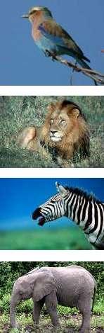 Tanzania Bird Watching and Wildlife Safari