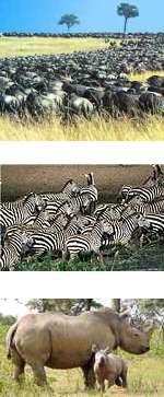 Short Wildebeest Migration Safari in Tanzania