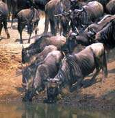 Tanzania Wildebeest Migration Lodge Safari  - 6 Days