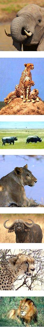 Amboseli and Serengeti National Park BIG 5 Safari