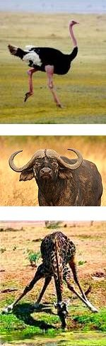Tanzania Wildebeest Migration - Mara River Crossing and Cultural Tour