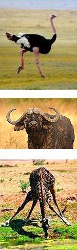 10 Days Tanzania Active wildlife and Cultural Tour