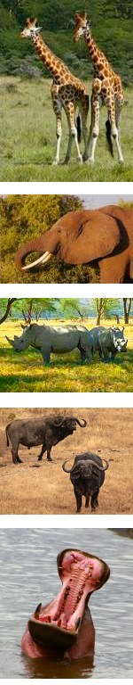 Kenya Safari to Amboseli and Tsavo 5 days